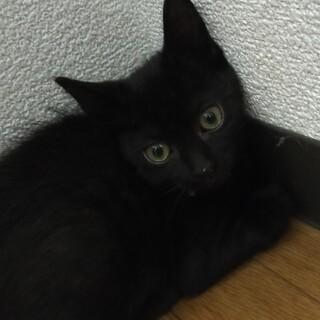 病院行きました!黒猫さん!