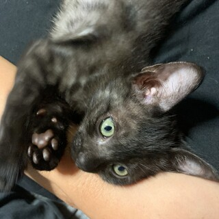 目がキレイな子猫3匹の里親募集です!