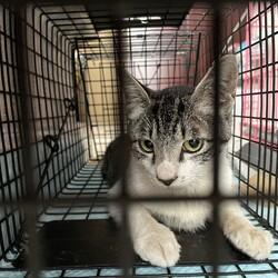 「母猫と子猫5匹を保護」サムネイル1