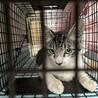 母猫と子猫5匹を保護