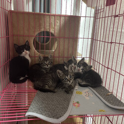 「母猫と子猫5匹を保護」サムネイル2