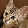 ギュと抱きしめたくなる☆キジトラ猫のうめちゃん❣️