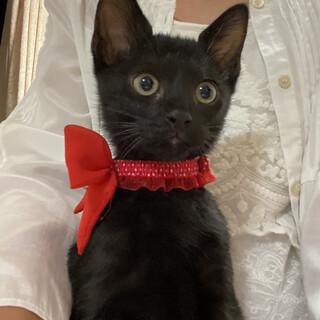 縁起の良い黒猫2ヶ月男の子