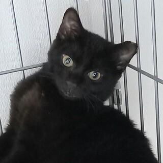 なれなれの寂しがり屋さん?幸せを運ぶ黒猫・海くん