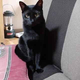 ◎可愛い黒猫のキキちゃん❤️