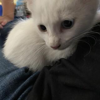 急募!子猫を保護しました!里親さん募集しています。