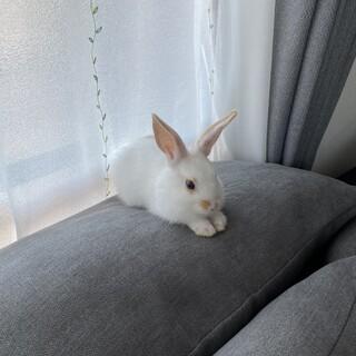 ミニウサギの元気な女の子