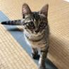控えめな美猫ちゃん  ひなたちゃん サムネイル2