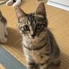 控えめな美猫ちゃん  ひなたちゃん サムネイル3