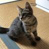 控えめな美猫ちゃん  ひなたちゃん サムネイル4