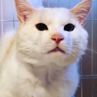 シャーシャー威嚇の猫さん