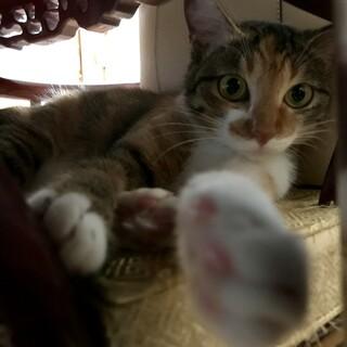 甘えん坊な猫さん