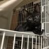 2〜3ヶ月の黒猫子猫