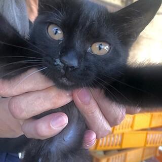 おっとり自分のペースで天然な黒猫くん