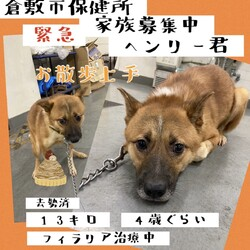 「2021年8月3日の倉敷→全頭譲渡決定!」サムネイル2