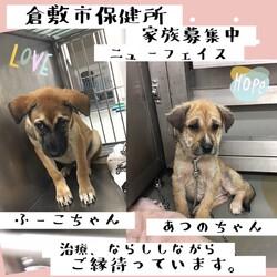 「2021年8月3日の倉敷→全頭譲渡決定!」サムネイル3