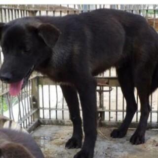13キロ野犬のこ