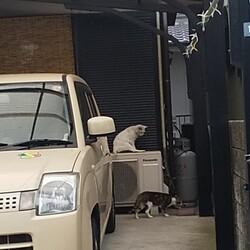 ことしの2月 ガレージの猫たち