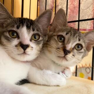 懐っこい仲良し女子♡マオ&ミイ 2ヶ月