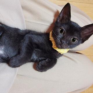 人も猫もお膝も大好き♡一緒に寝れます♡