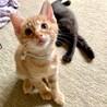 6匹の子猫と母猫里親募集