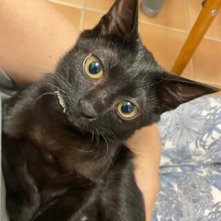 2ヶ月半 ジェイ 黒猫4姉妹