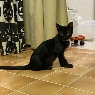 2ヶ月半 メイ 黒猫4姉妹