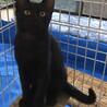 人懐っこくて甘えん坊の黒猫ちゃん