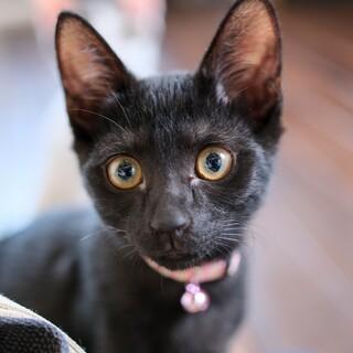 麗しの黒猫☆メーテル