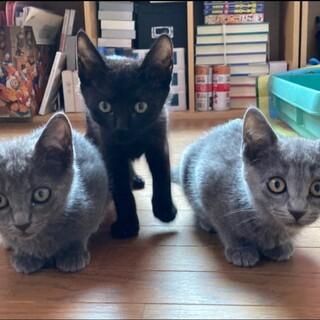 代理投稿 可愛い仔猫たちの里親募集