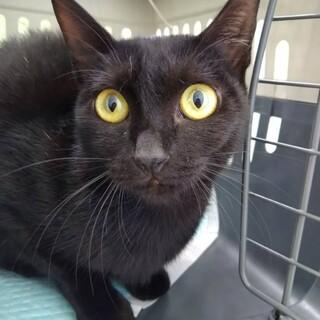 心優しい黒猫のクロちゃん…