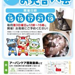 まだまだ子猫祭り。完全予約制の保護猫たちのお見合い会