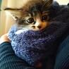 猫砂について。