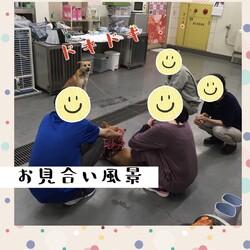 「倉敷のワルツちゃんのお見合い→譲渡決定!」サムネイル2