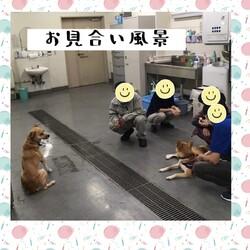 「倉敷のワルツちゃんのお見合い→譲渡決定!」サムネイル3