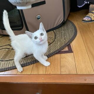 可愛い〰白猫ちゃん 女の子