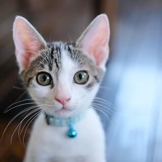 瞳が綺麗な美少年テト