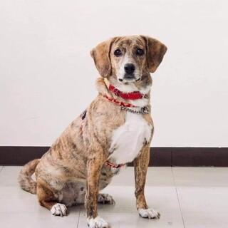 琉球犬MIXの『アイちゃん』です。