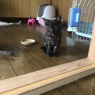 しましまの黒猫2ヶ月