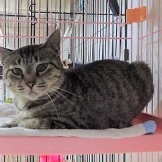 【動画】小さな体で頑張って生きてきた猫