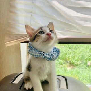 モデル猫級の可愛い男の子♡