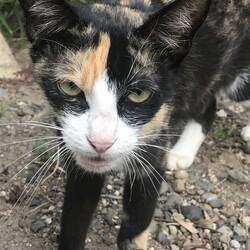 隣人の無責任な猫飼育について