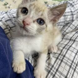 ごんまるキャット猫の譲渡会 サムネイル2