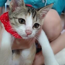 ごんまるキャット猫の譲渡会 サムネイル3