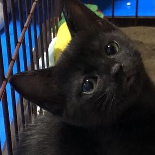 小柄で元気いっぱい黒猫ガール