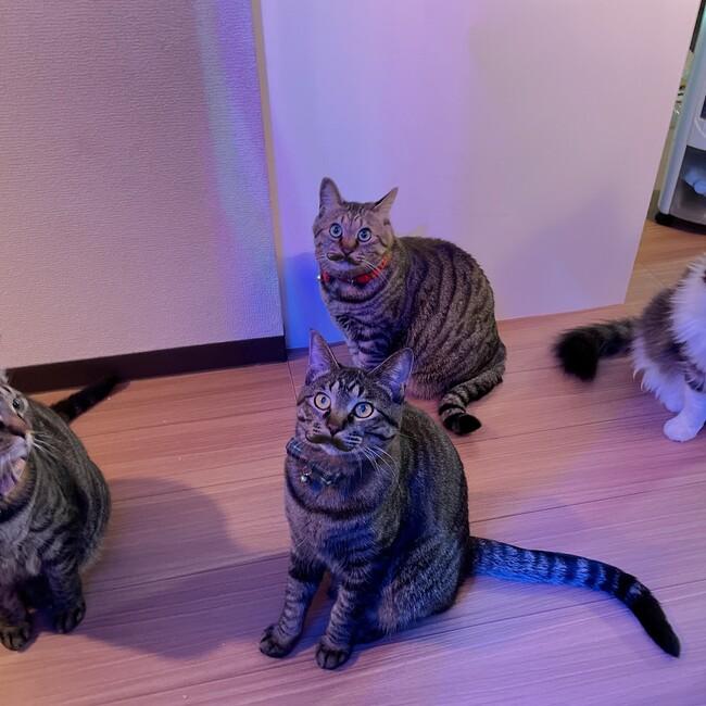 TPKD4catsのカバー写真