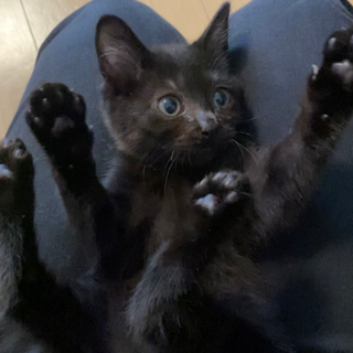 のりちゃん★猫エイズは不幸の印なんかじゃない