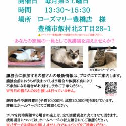 保護猫譲渡会&フリーマーケット サムネイル1