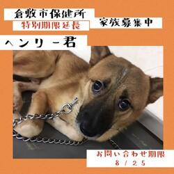2021年8月12日の倉敷→全頭譲渡決定!