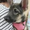 センターよりレスキューしたお母さんが産んだ子犬 サムネイル7